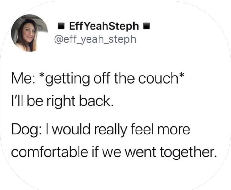 Text - EffYeahSteph @eff_yeah_steph Me: *getting off the couch* I'l be right back Dog: I would really feel more comfortable if we went together.