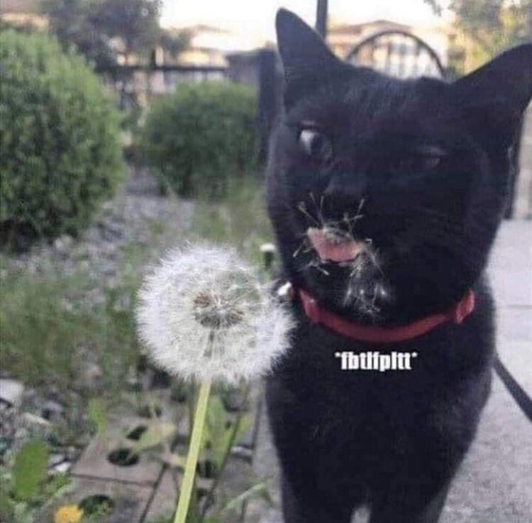 Cat - Ibtifpitt