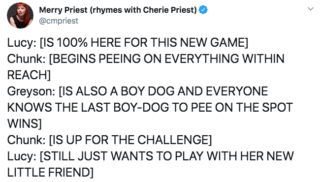 Text - Merry Priest (rhymes with Cherie Priest) @cmpriest Lucy: [IS 100% HERE FOR THIS NEW GAME Chunk: [BEGINS PEEING ON EVERYTHING WITHIN REACH] Greyson: [IS ALSO A BOY DOG AND EVERYONE KNOWS THE LAST BOY-DOG TO PEE ON THE SPOT WINS] Chunk: [IS UP FOR THE CHALLENGE] Lucy: [STILL JUST WANTS TO PLAY WITH HER NEW LITTLE FRIEND]