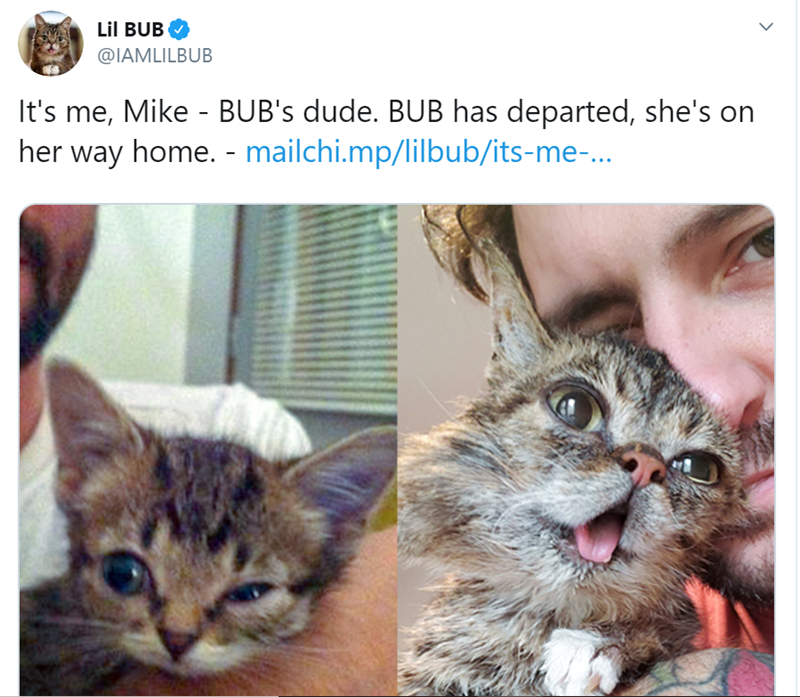 Cat - Lil BUB @IAMLILBUB It's me, Mike - BUB's dude. BUB has departed, she's on her way home. - mailchi.mp/lilbub/its-me-...