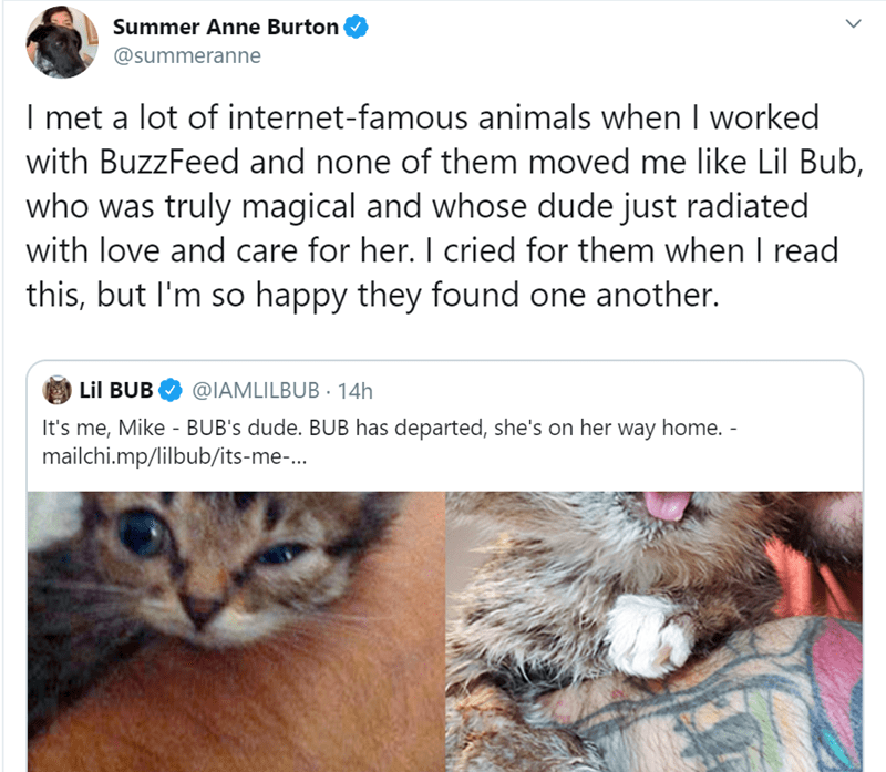 Cat - Summer Anne Burton @summeranne I met a lot of internet-famous animals when I worked with BuzzFeed and none of them moved me like Lil Bub, who was truly magical and whose dude just radiated with love and care for her. I cried for them when I read this, but I'm so happy they found one another. Lil BUB @IAMLILBUB14H It's me, Mike - BUB's dude. BUB has departed, she's on her way home. - mailchi.mp/lilbub/its-me-...