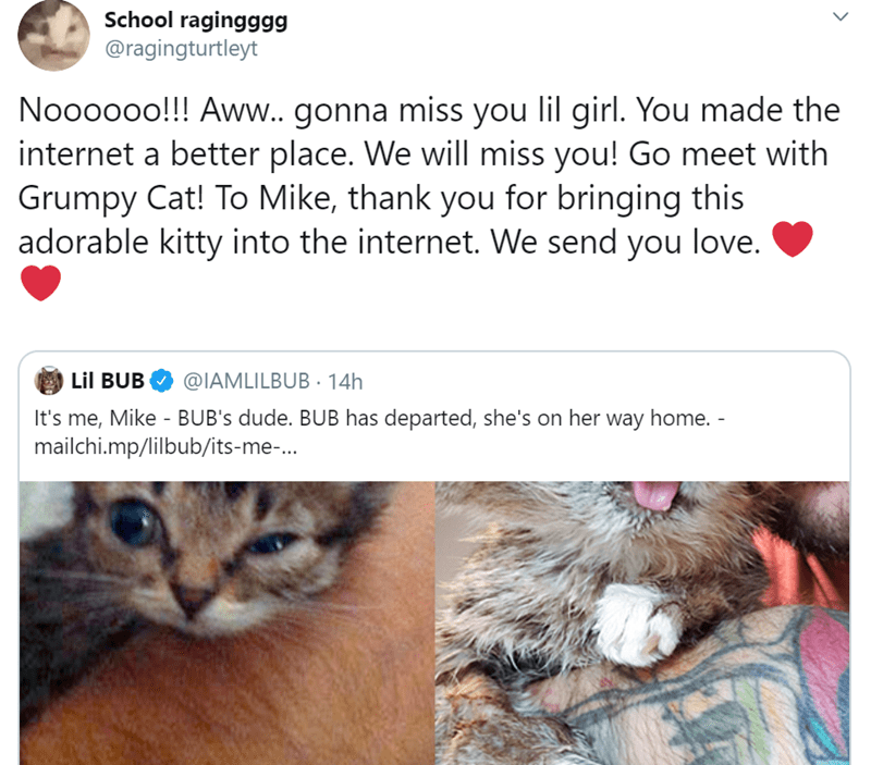 Cat - School ragingggg @ragingturtleyt Noooooo!! Aww.. gonna miss you lil girl. You made the internet a better place. We will miss you! Go meet with Grumpy Cat! To Mike, thank you for bringing this adorable kitty into the internet. We send you love. Lil BUB @IAMLILBUB14H It's me, Mike - BUB's dude. BUB has departed, she's on her way home. - mailchi.mp/lilbub/its-me-...