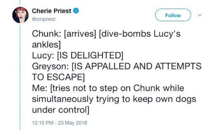 Text - Cherie Priest Follow @cmpriest Chunk: [arrives] [dive-bombs Lucy's ankles] Lucy: [IS DELIGHTED] Greyson: [IS APPALLED AND ATTEMPTS TO ESCAPE] Me: [tries not to step on Chunk while simultaneously trying to keep own dogs under control] 12:10 PM-23 May 2018