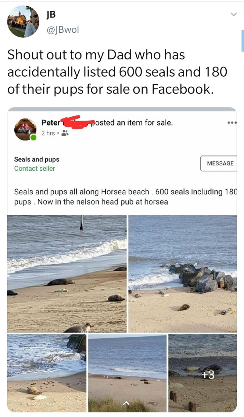 Text - JB @JBwol Shout out to my Dad who has accidentally listed 600 seals and 180 for sale on Facebook sdnd of their Peter posted an item for sale. 2 hrs Seals and pups MESSAGE Contact seller Seals and pups all along Horsea beach. 600 seals including 180 pups. Now in the nelson head pub at horsea +3