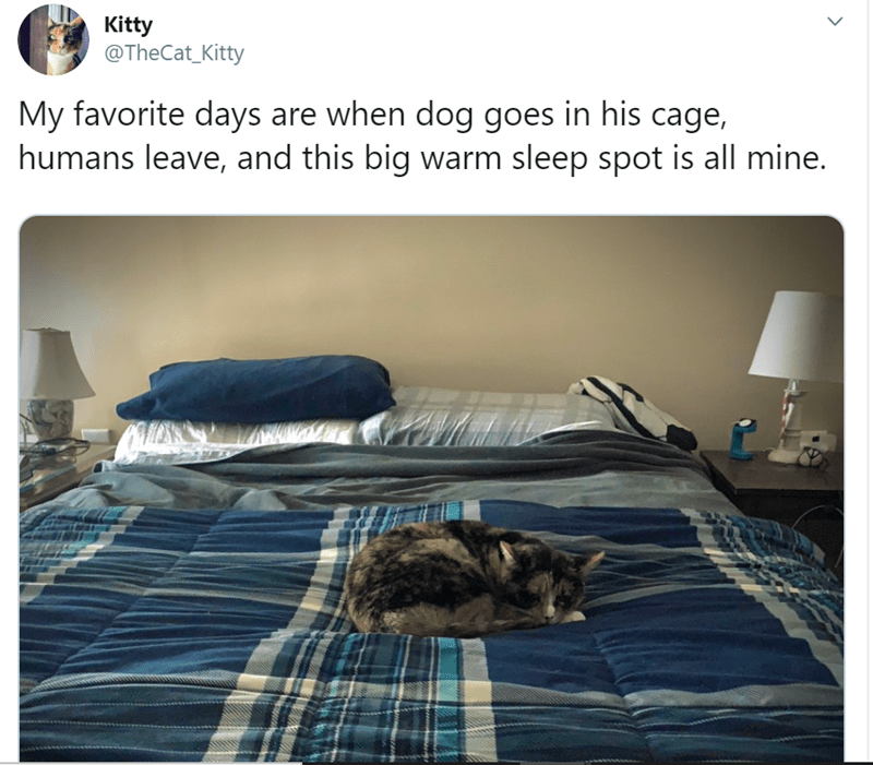 Room - Kitty @TheCat_Kitty My favorite days are when dog goes in his cage, humans leave, and this big warm sleep spot is all mine.