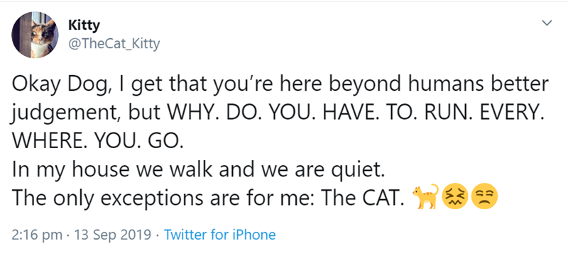 Text - Kitty @TheCat_Kitty Okay Dog, I get that you're here beyond humans better judgement, but WHY. DO. YOU. HAVE. TO. RUN. EVERY. WHERE. YOU. GO. In my house we walk and we are quiet. The only exceptions are for me: The CAT. 2:16 pm · 13 Sep 2019 · Twitter for iPhone