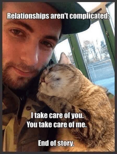 cat memes - 9398756096
