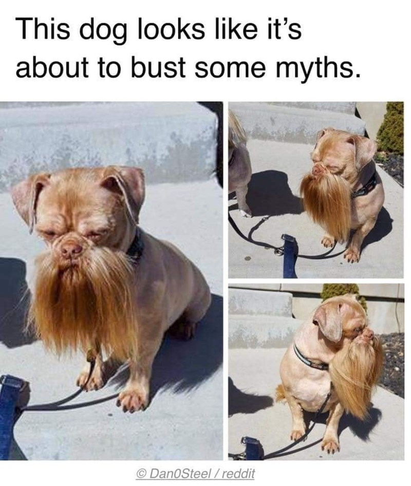 Dog breed - This dog looks like it's about to bust some myths. DanOSteel/reddit