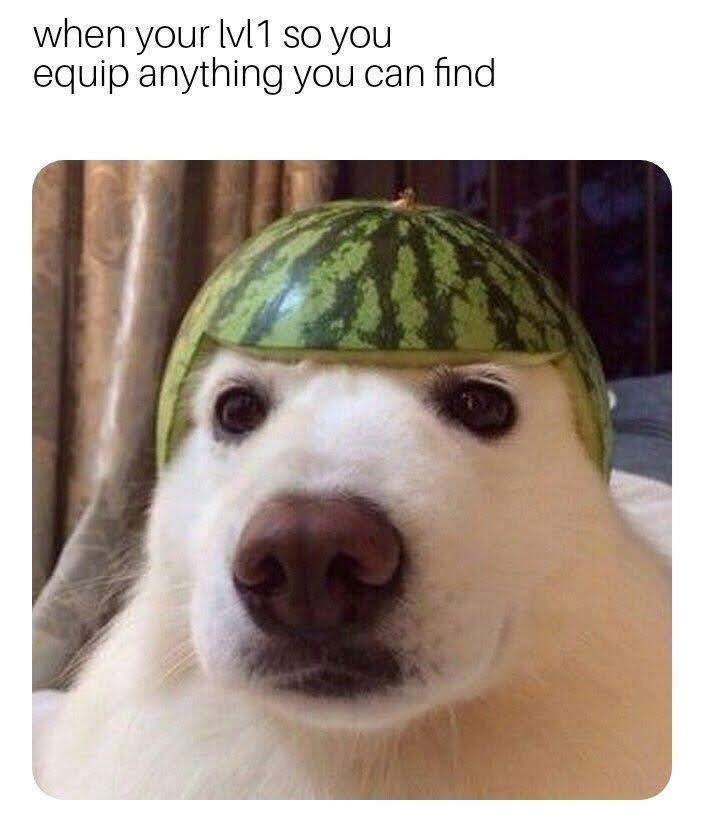 Dog - when your lvl1 so you equip anything you can find