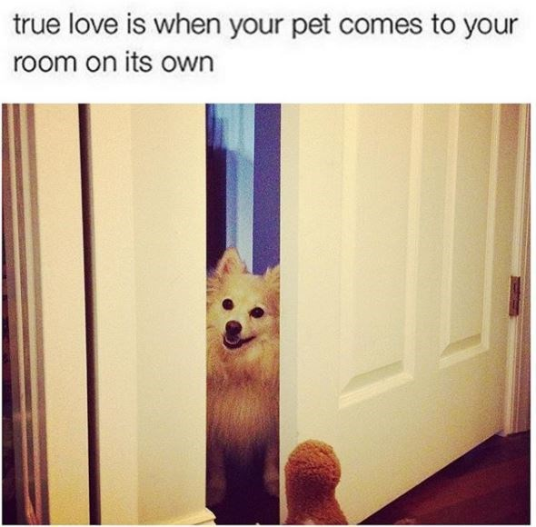 Dog - true love is when your pet comes to your room on its Own