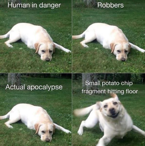 Dog - Human in danger Robbers Small potato chip Actual apocalypse fragment hitting floor
