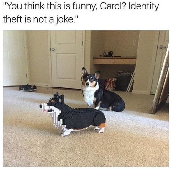 "Welsh Corgi - ""You think this is funny, Carol? Identity theft is not a joke."""