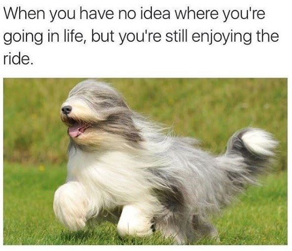 Dog - When you have no idea where you're going in life, but you're still enjoying the ride.