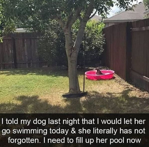 Yard - I told my dog last night that I would let her go swimming today & she literally has not forgotten. I need to fill up her pool now