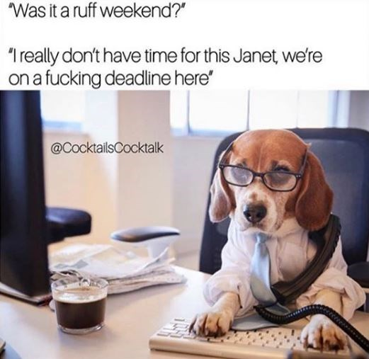 "Dog - Was it a ruff weekend?"" really dont have time for this Janet, were on a fucking deadline here' @CocktailsCocktalk"