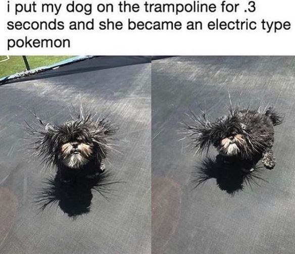 Organism - i put my dog on the trampoline for .3 seconds and she became an electric type pokemon