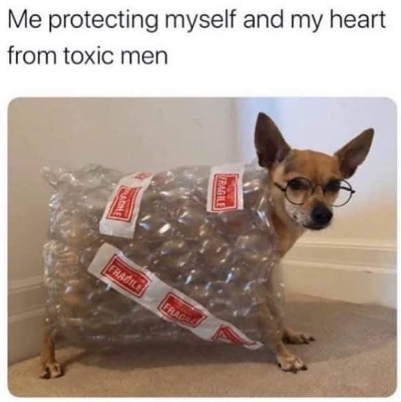 Canidae - Me protecting myself and my heart from toxic men FRAGILE FRAC RAGILE
