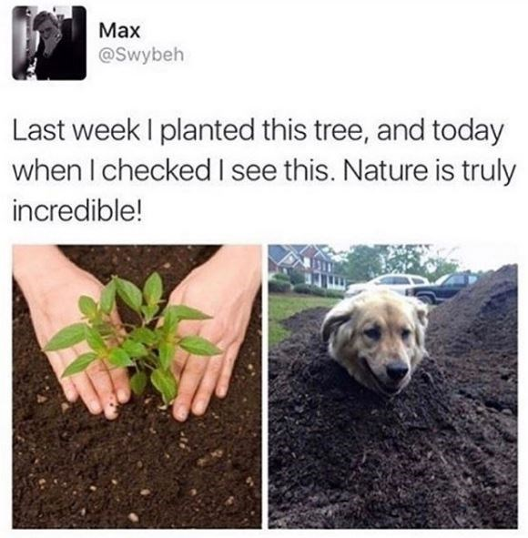 Soil - Маx @Swybeh Last week I planted this tree, and today when I checked I see this. Nature is truly incredible!