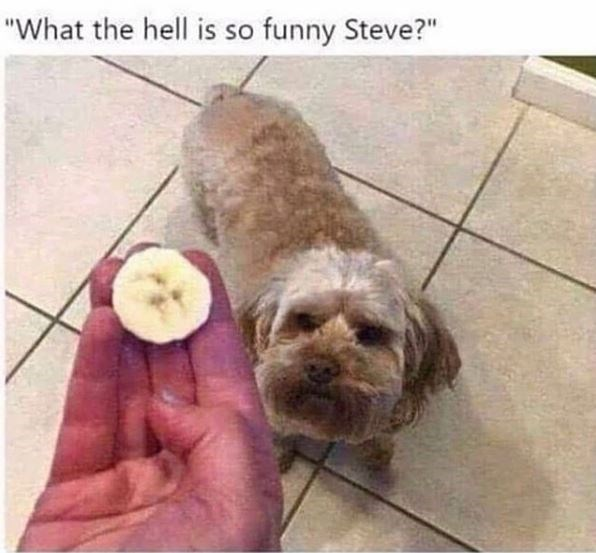 "Dog - ""What the hell is so funny Steve?"""