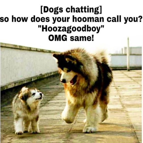 "Dog - [Dogs chatting] so how does your hooman call you? ""Hoozagoodboy"" OMG same!"
