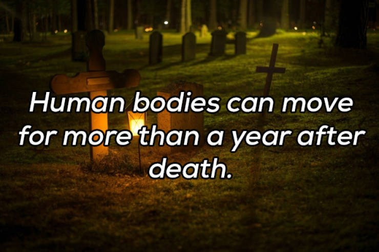 Text - Human bodies can move for more thana year after death.