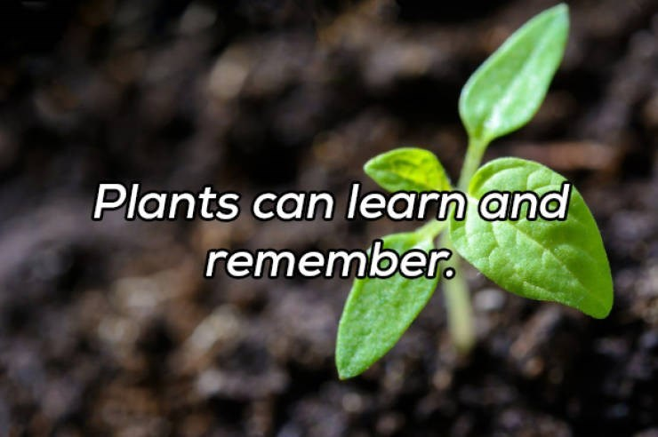 Flower - Plants can learn and remember