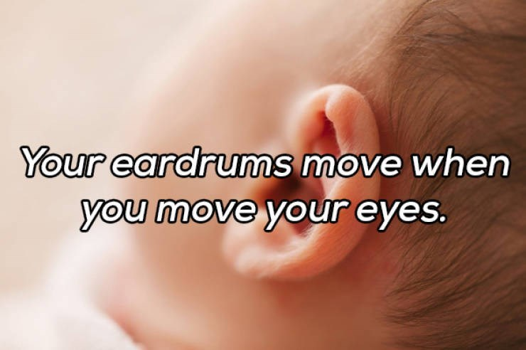 Skin - Your eardrums move when you move your eyes.