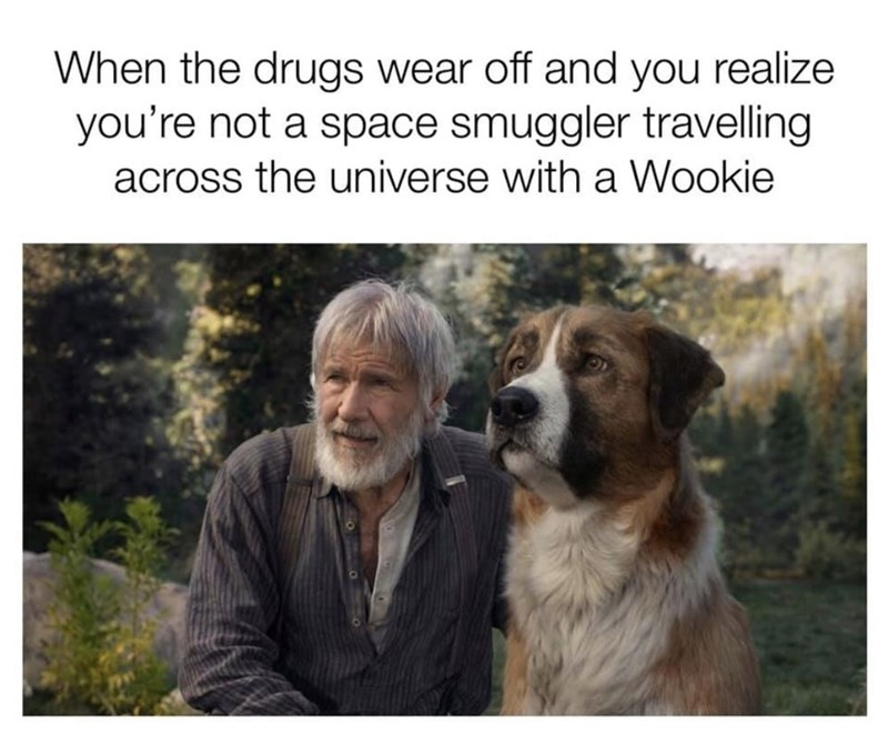 https://i.chzbgr.com/full/9399298816/h56A27F0D/dog-drugs-wear-off-and-realize-not-space-smuggler-travelling-across-universe-with-wookie