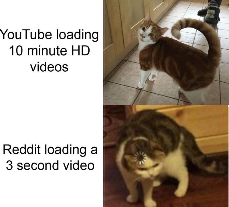 Cat - YouTube loading 10 minute HD videos Reddit loading a 3 second video