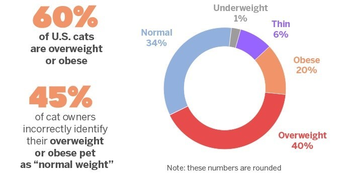 "Text - Underweight 1% 60% Thin Normal 6% of U.S. cats 34% are overweight or obese Obese 20% 45% of cat owners incorrectly identify their overweight or obese pet as ""normal weight"" Overweight 40% Note: these numbers are rounded"