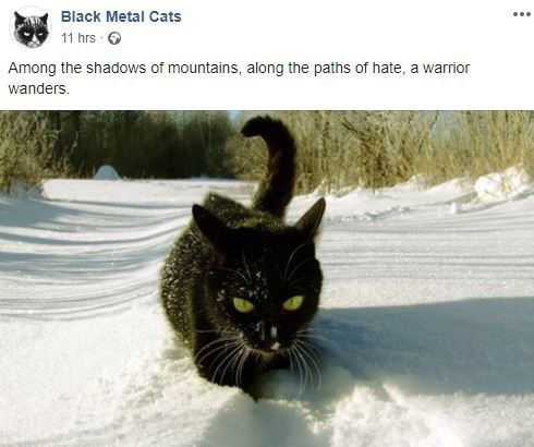 Cat - Black Metal Cats 11 hrs Among the shadows of mountains, along the paths of hate, a warrior wanders.