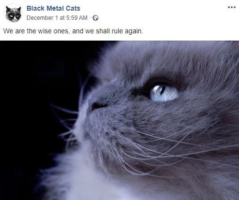 Cat - Black Metal Cats December 1 at 5:59 AM We are the wise ones, and we shall rule again.