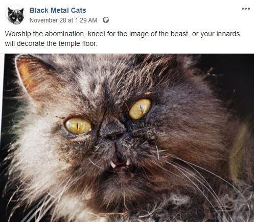 Cat - Black Metal Cats November 28 at 1:29 AM Worship the abomination, kneel for the image of the beast, or your innards will decorate the temple floor.