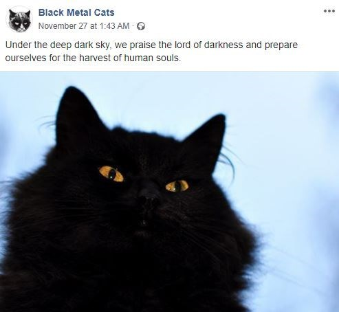 Cat - Black Metal Cats November 27 at 1:43 AM Under the deep dark sky, we praise the lord of darkness and prepare ourselves for the harvest of human souls.