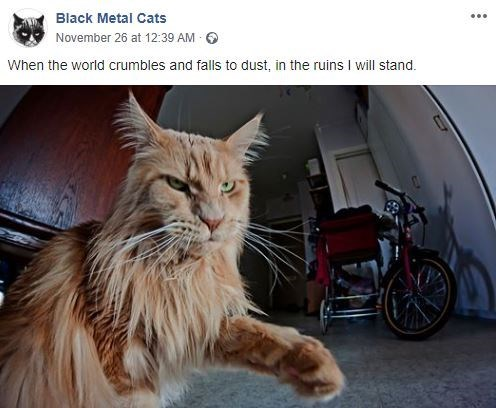 Cat - Black Metal Cats November 26 at 12:39 AM When the world crumbles and falls to dust, in the ruins I will stand.
