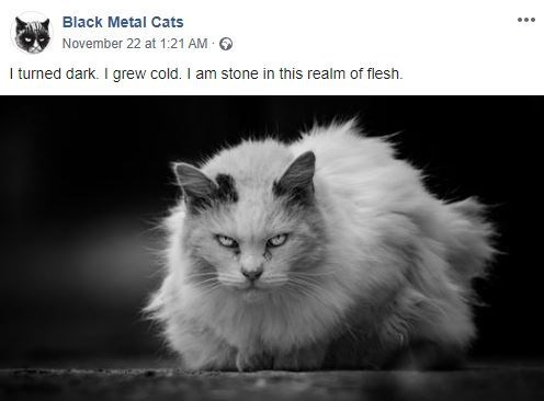 Cat - Black Metal Cats November 22 at 1:21 AM I turned dark. I grew cold. I am stone in this realm of flesh