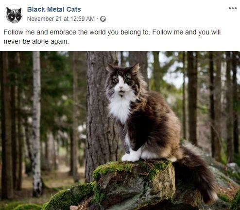 Cat - Black Metal Cats November 21 at 12:59 AM Follow me and embrace the world you belong to. Follow me and you will never be alone again.