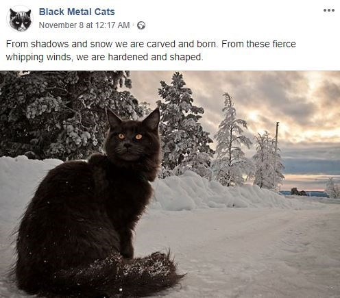 Cat - Black Metal Cats November 8 at 12:17 AM From shadows and snow we are carved and bon. From these fierce whipping winds, we are hardened and shaped.