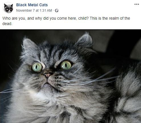 Cat - Black Metal Cats November 7 at 1:31 AM Who are you, and why did you come here, child? This is the realm of the dead.