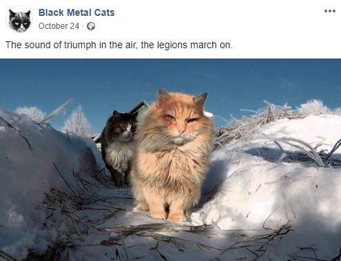Cat - Black Metal Cats October 24 The sound of triumph in the air, the legions march on.