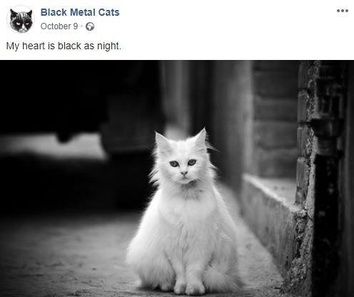 Cat - Black Metal Cats October 9 6 My heart is black as night.