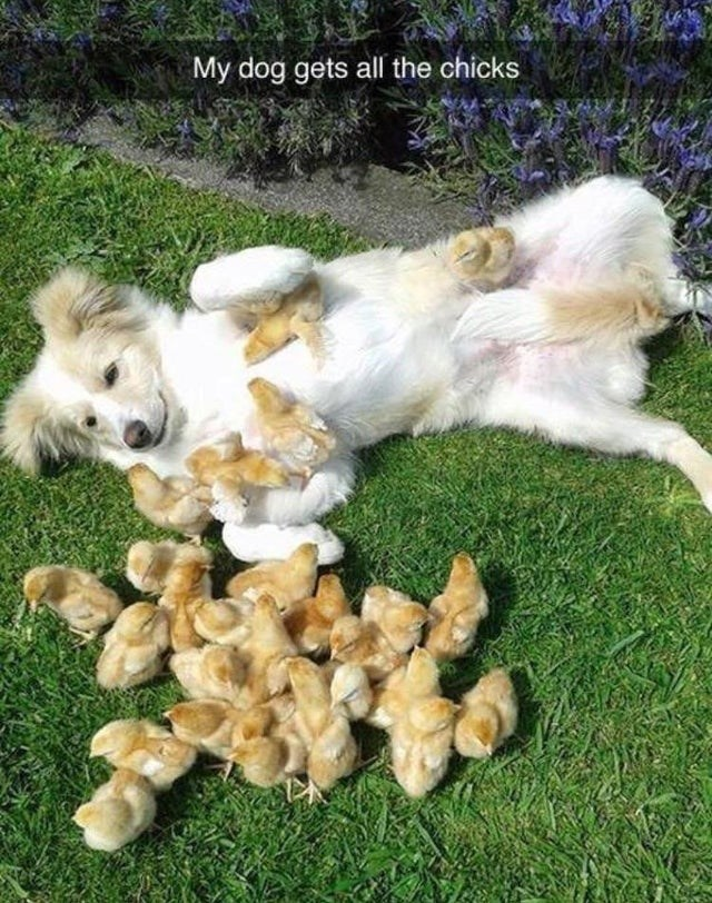 Dog - My dog gets all the chicks