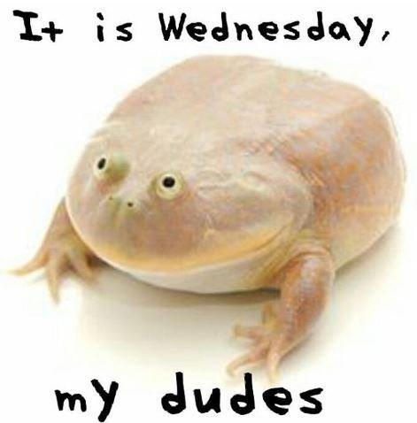 Amphibian - It is Wednesday, my dudes