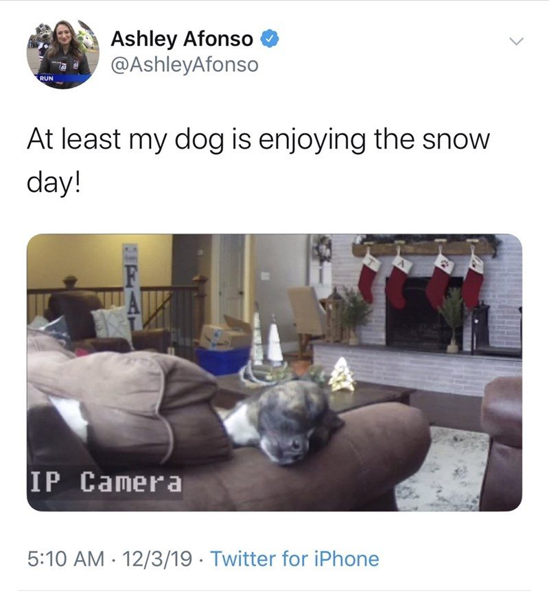 Text - Ashley Afonso O @AshleyAfonso RUN At least my dog is enjoying the snow day! IP Camera 5:10 AM · 12/3/19 · Twitter for iPhone