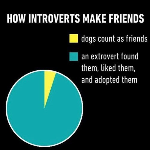 Text - HOW INTROVERTS MAKE FRIENDS dogs count as friends an extrovert found them, liked them, and adopted them
