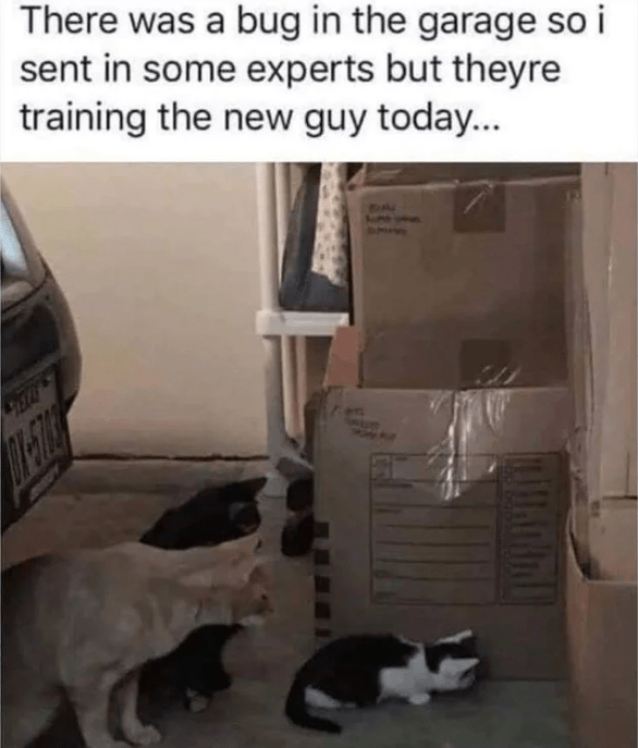 Cat - There was a bug in the garage so i sent in some experts but theyre training the new guy today...