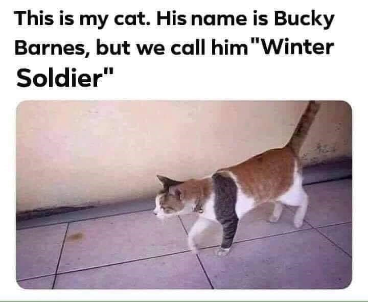 """Cat - This is my cat. His name is Bucky Barnes, but we call him""""Winter Soldier"""""""
