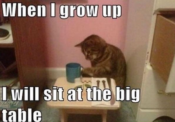 Cat - When I grow up I will sit at the big table