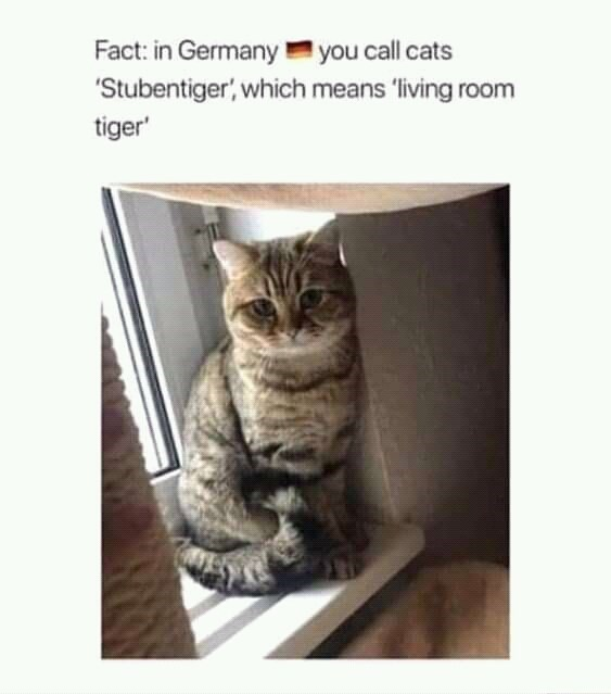 Cat - Fact: in Germany you call cats 'Stubentiger', which means 'living room tiger'