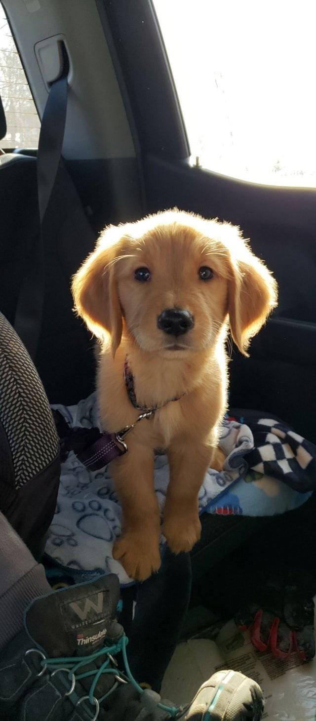 Dog - WRIZENING Thinsul